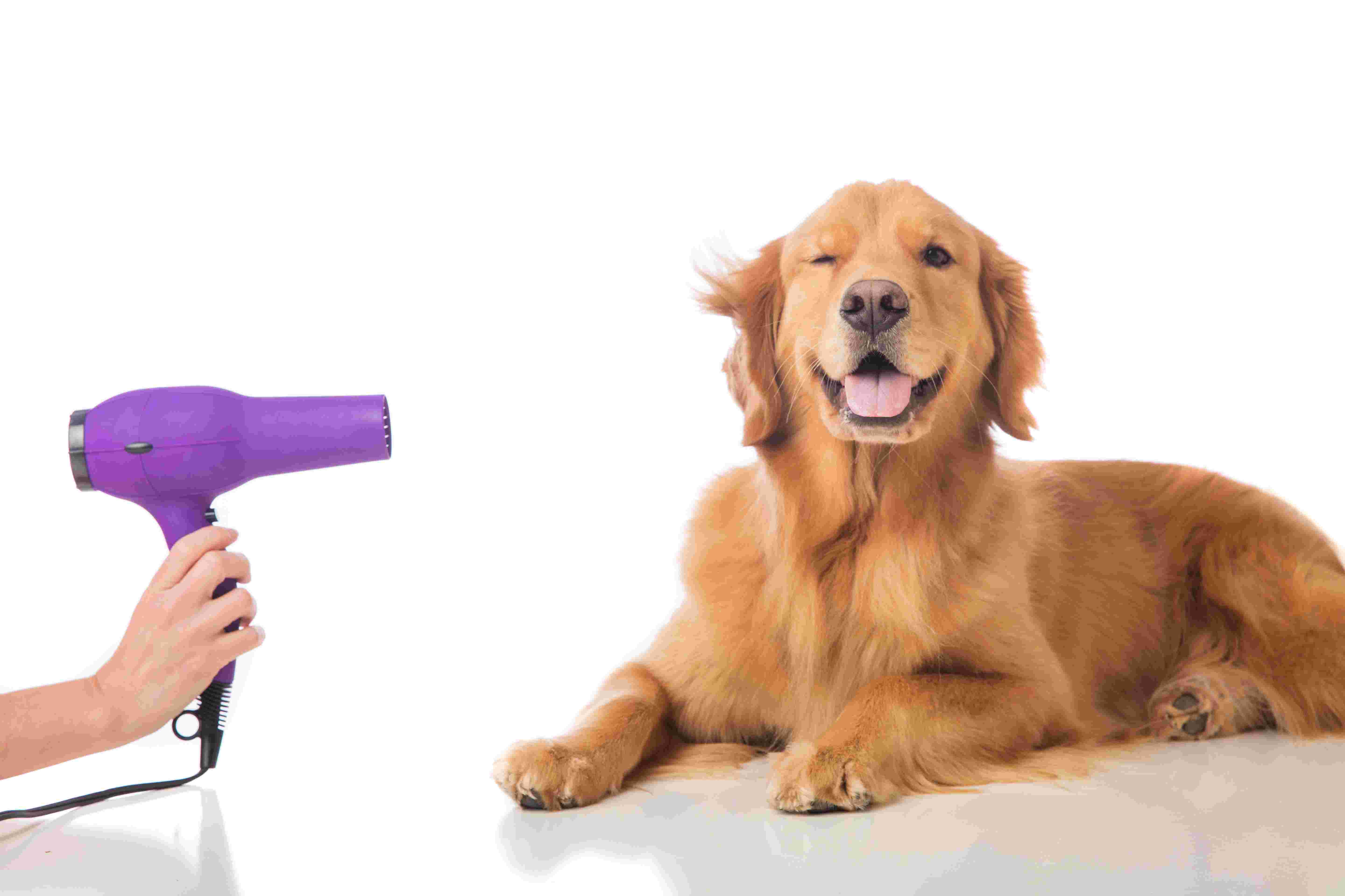 Dog Grooming by Sarahs Pet Care Services